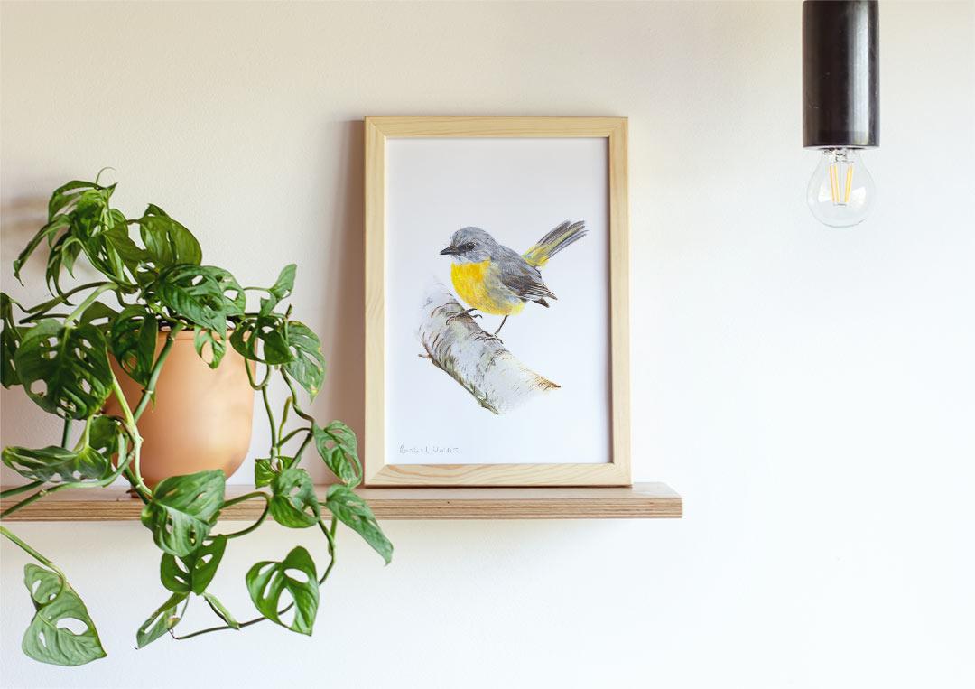 Eastern Yellow Robin – Example of Framed Fine Art Print