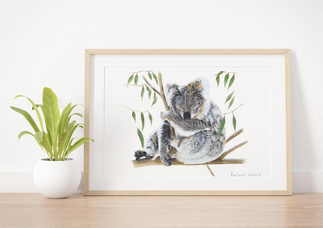 Koala – Example of Framed Fine Art Print