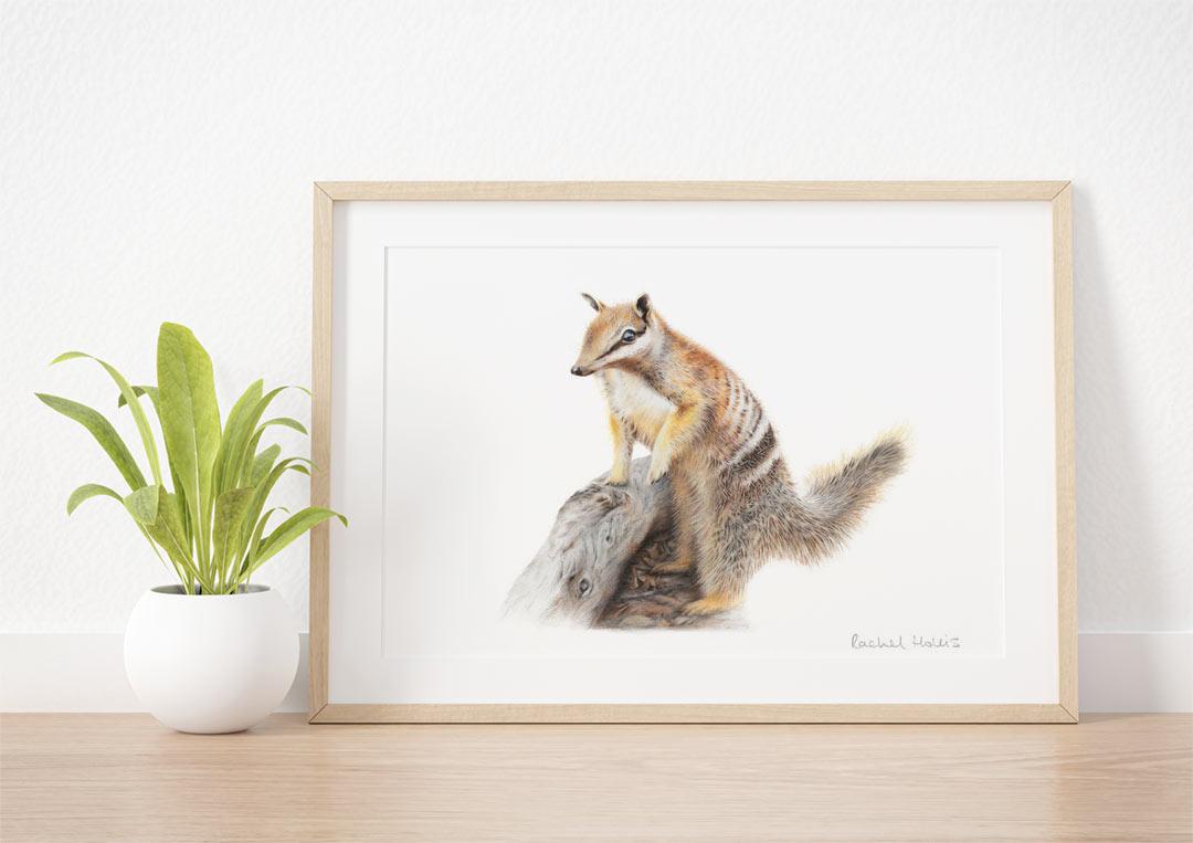 Numbat – Example of Framed Fine Art Print