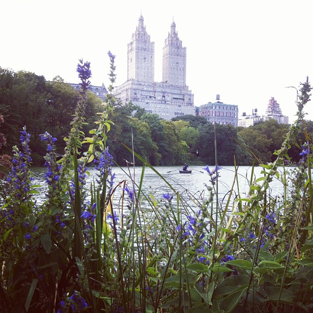 Central Park View 2