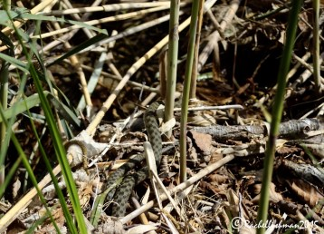 Wildlife is never far away from the trails! Look carefully and you can even find water snakes!