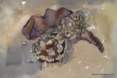 watercolor pine cones and seed pod