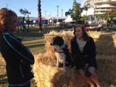 Very nervous sitting next to a dog at the Royal Easter Show in Sydney. I'm not good with dogs
