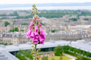 Edinburgh: Around town #2