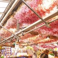 Amsterdam: Flower market