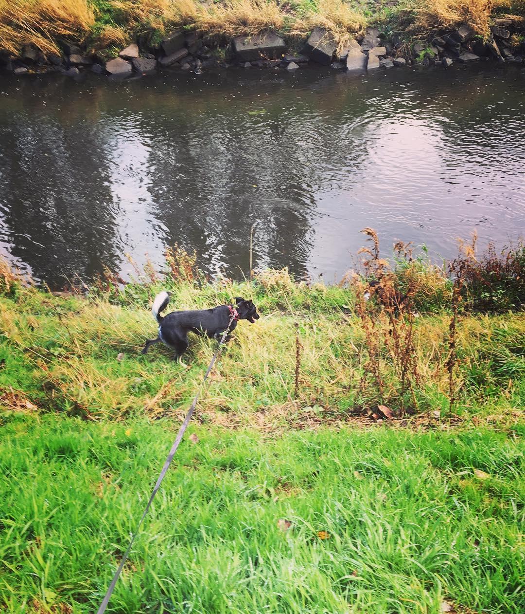best dog walks