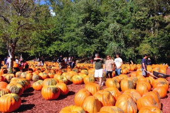 Families walk through Burt's Pumpkin Patch in Dawsonville, Ga. Many have been coming to Burt's as a fall tradition for several years.