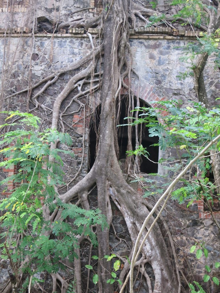 This ruined fort, overgrown with trees, may have been one of the string of forts built by the French, along with Fort St. Louis.