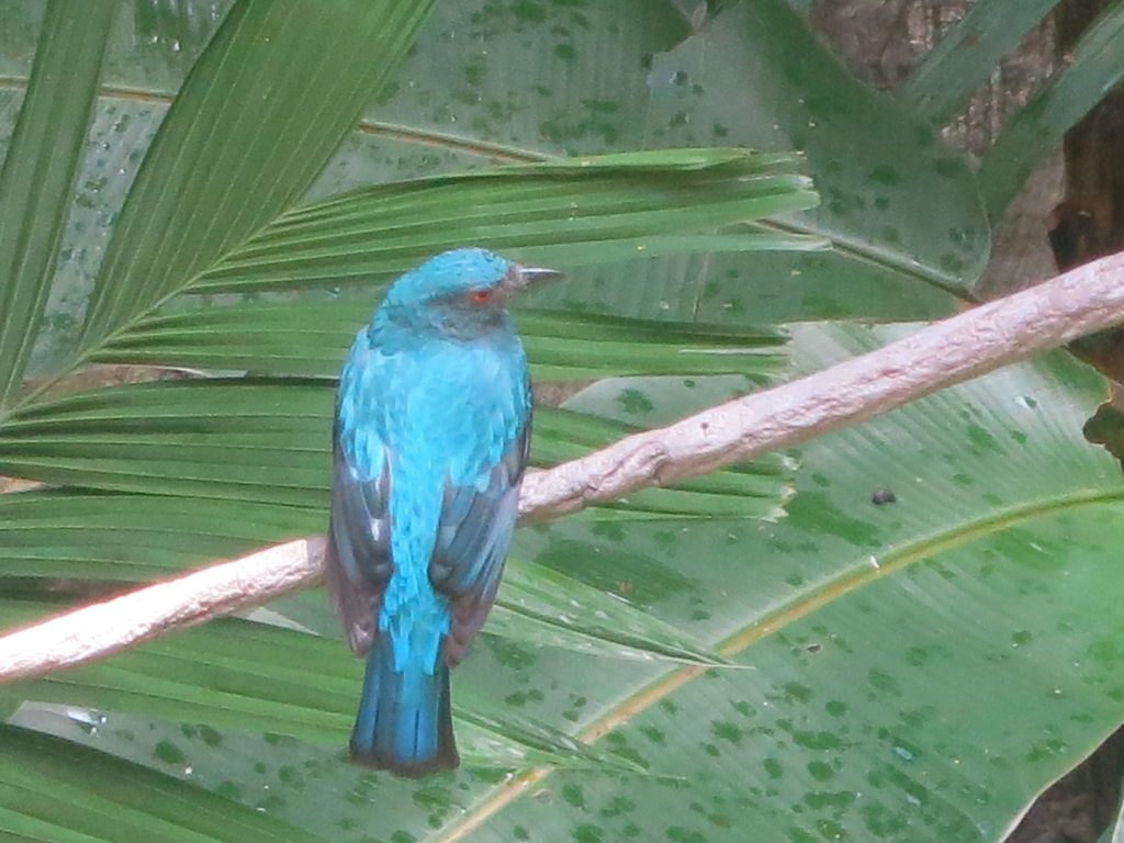 A small, brightly colored bird in the aviary in Hong Kong Park