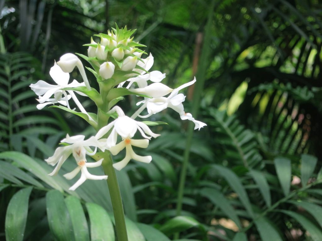 a pretty white flower in the conservatory in Hong Kong Park