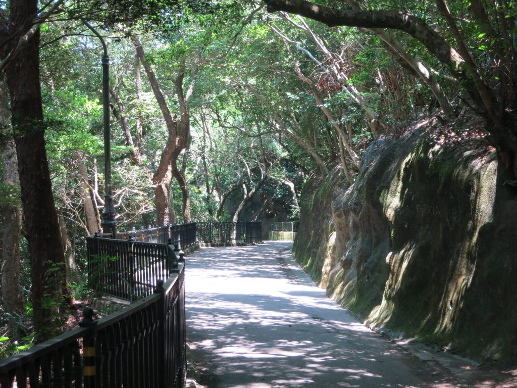 view down the path, shaded by the forest, with a fence on the left and hill on the right