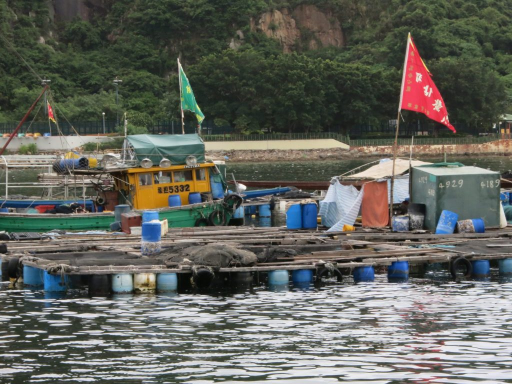 a collection of floats hold up a grid of fish enclosures, all attached together and floating on the water, on Lamma Island