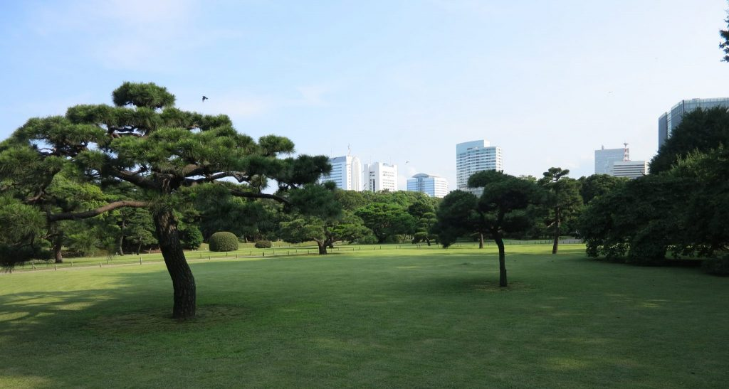 view of a field with carefully pruned trees in Hama-rikyu Garden in Tokyo