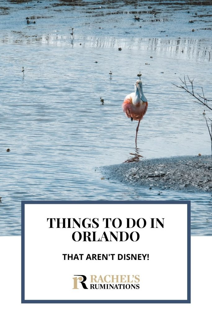 Pinnable image Text: Things to do in Orlando besides Disney Image: a spoonbill - pink body, long, spoonshaped beak, stands in shallow water, balancing on one leg.