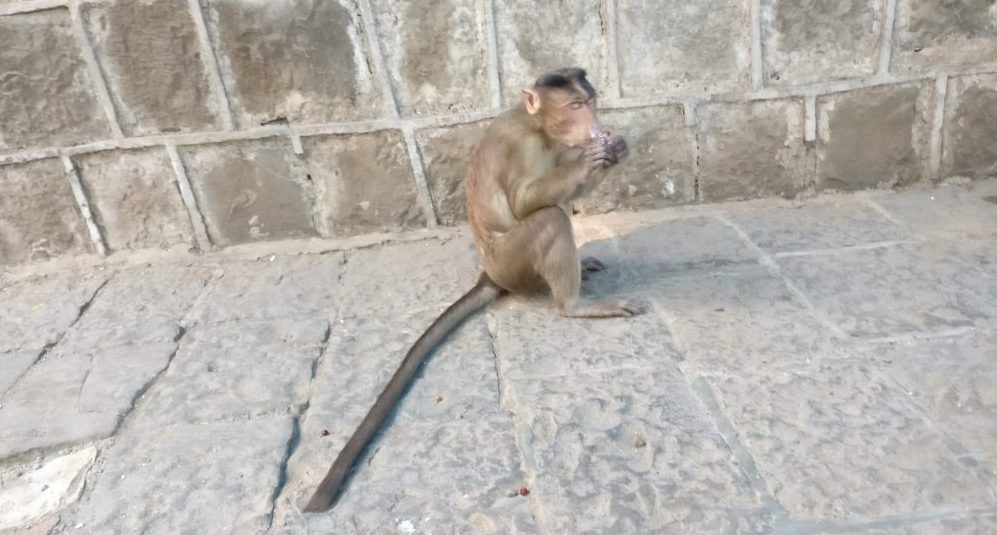 This may or may not have been the guilty party. Elephanta Island travel guide