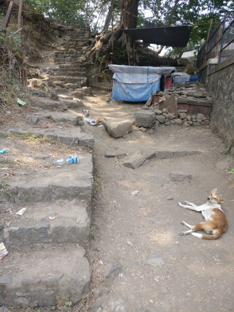 The beginning of the path up to Gun Hill, complete with lounging dogs and litter.