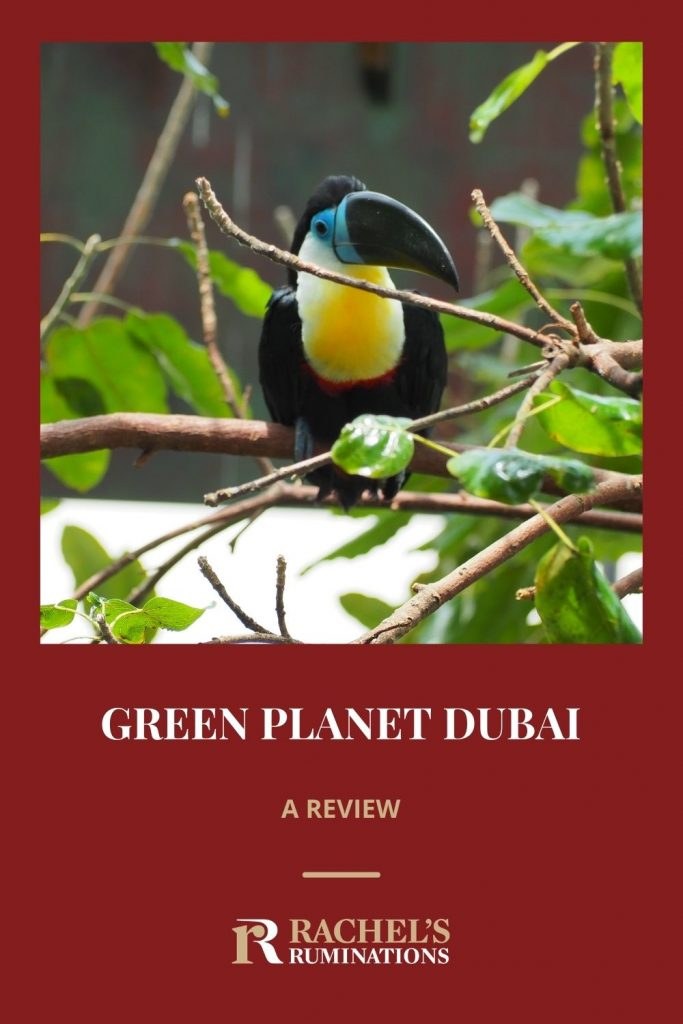 Image: a toucan sitting on a branch Text: Green Planet Dubai: a review (and the Rachel's Ruminations logo