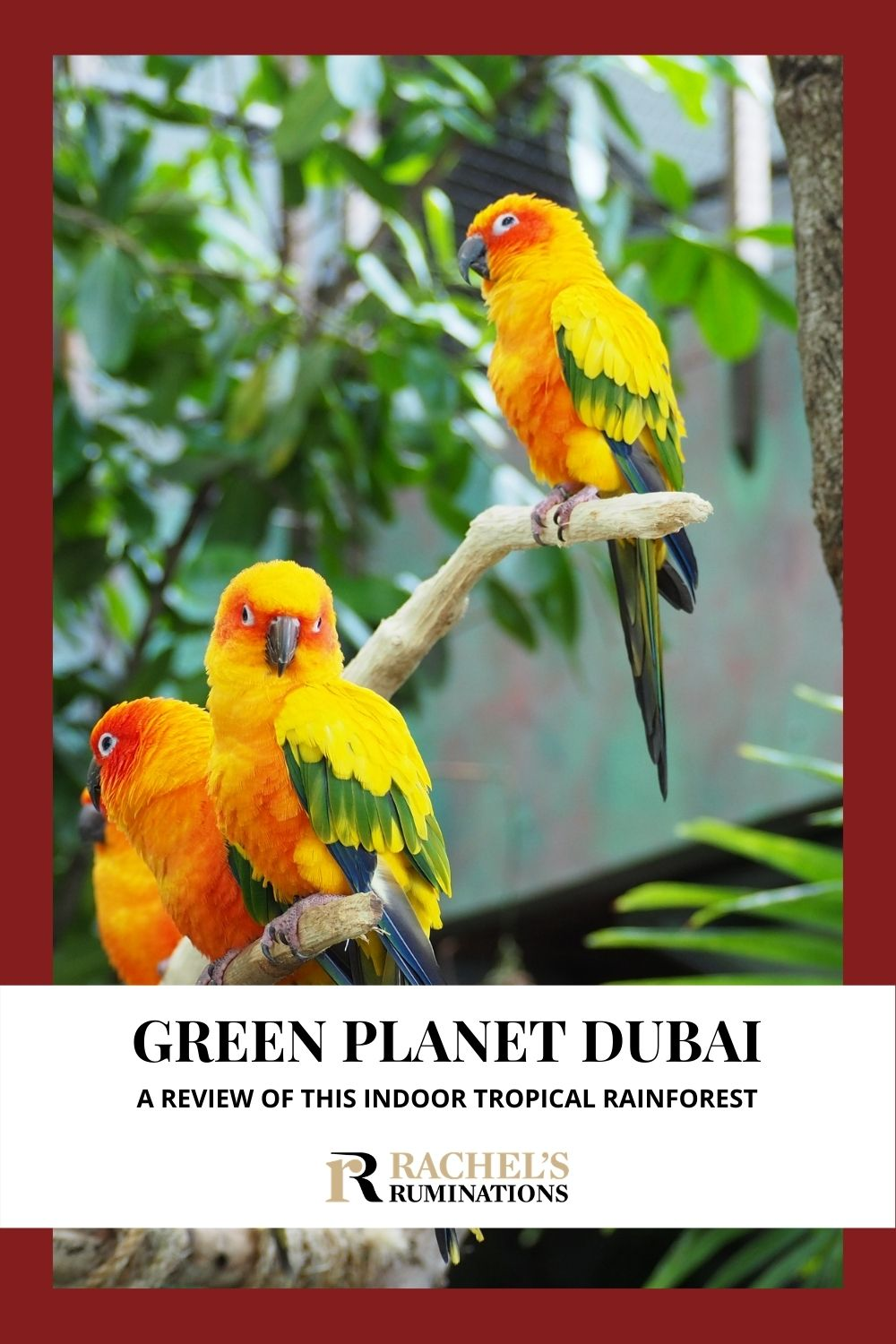 """The Green Planet Dubai is an indoor tropical rainforest, the world's """"largest indoor man-made and life-sustaining tree,"""" with over 3000 species inside. via @rachelsruminations"""