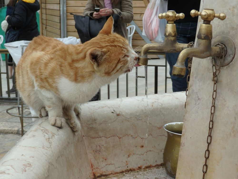 A stray cat helps himself to water at fountain next to the Western Wall in Jerusalem.