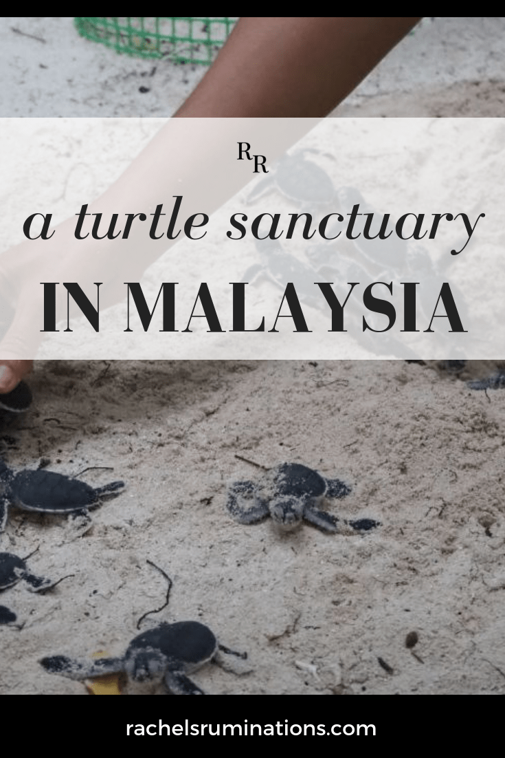 Lankayan Island, off the coast of Malaysian Borneo, is home to a lovely resort, but it also hosts a turtle sanctuary. Read here about what you can see here and at other sanctuaries around the world!