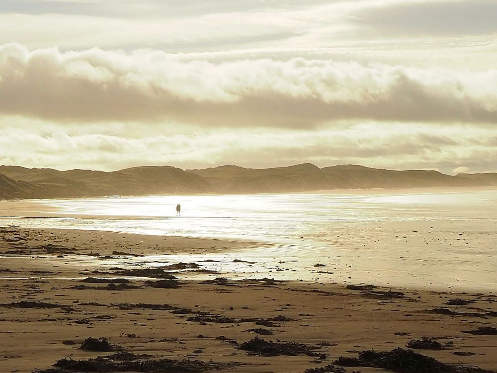 Dunnet Beach, near the northernmost point of the UK mainland