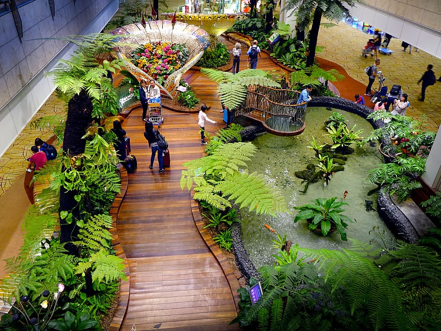Seen from above, a wooden path in Changi Airport in Singapore winds between a strip of greenery on the left and a plant-fringed pond on the right.