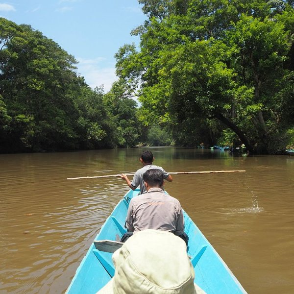 Exploring the Brunei rainforest: Ulu Temburong National Park
