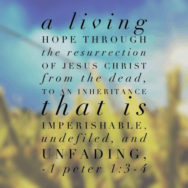 Pure Joy Bible Reading Summary Week 1 - RachelWojo.com