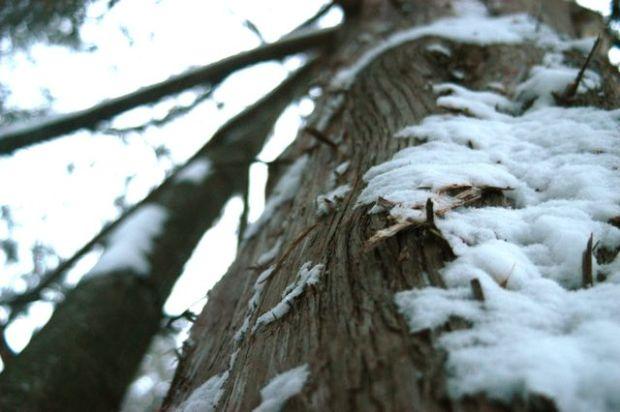Spring! | Clean. : : the LuSa Organics Blog