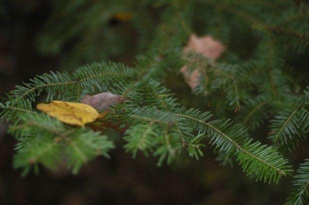 Autumn {Clean}