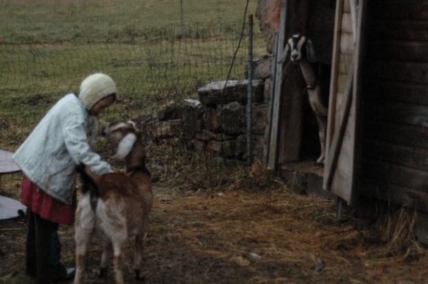 Nubian goats | Clean.