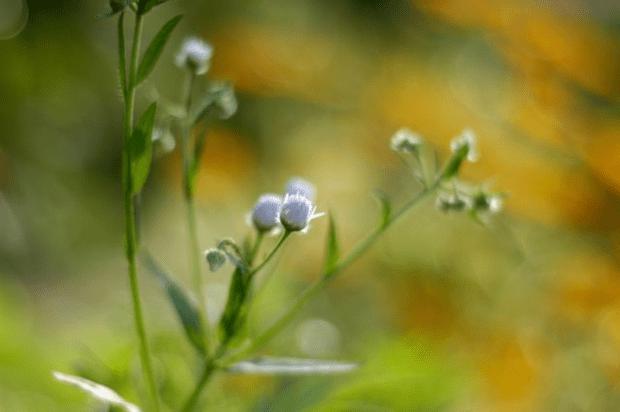 Ten tips for a happy life | Clean. www.lusaorganics.typepad.com