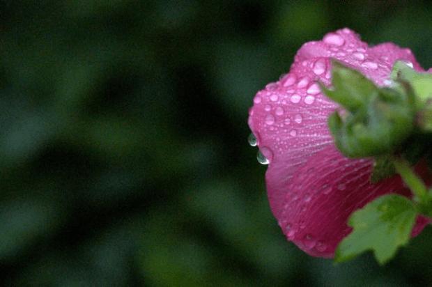 Your life is beautiful | Clean. www.lusaorganics.typepad.com