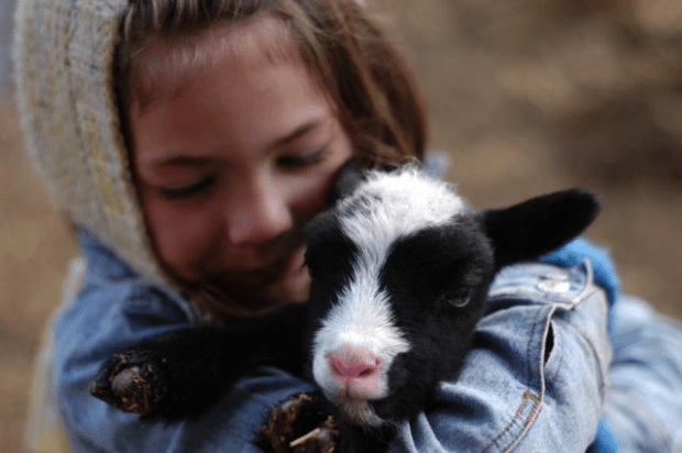 A girl and her lamb