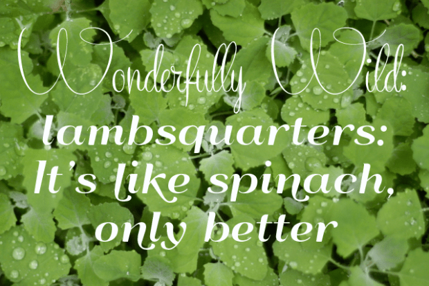 Wonderfully wild lambsquarters: like spinach, only better. | Clean.