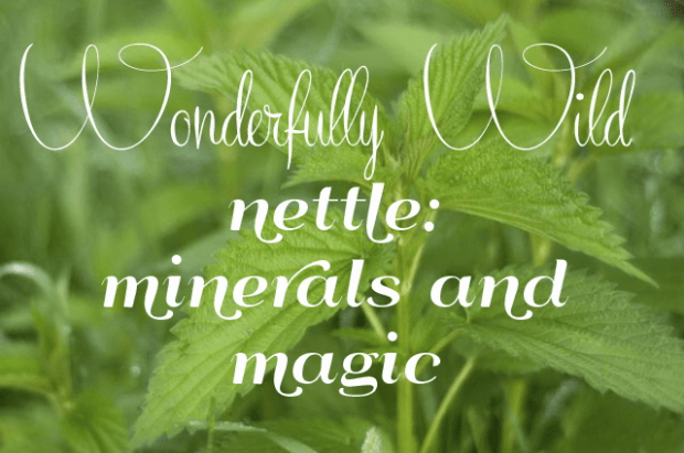 Wonderfully wild - nettle: minerals and magic