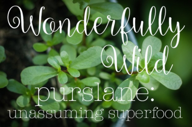 Wonderfullywild