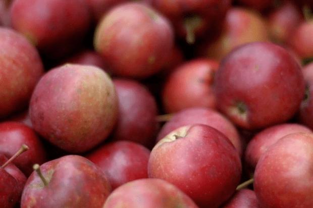 Gluten-free apple crisp recipe & honey-sweetened raw milk ice cream recipe   www.lusaorganics.typepad.com