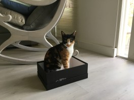 Kitty, stuck in a cat trap