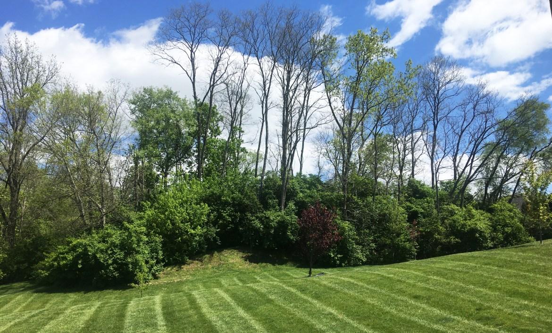 May9-BackLine Trees