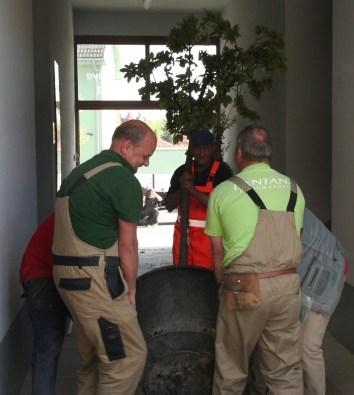 Prenos stromov s koreňovými balmi z dodávky do záhrady si vyžadoval niekoľko silných rúk.