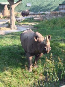 rhinos_5