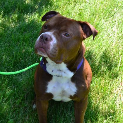 Duke Adopt-a-Pet Wisconsin Humane Society