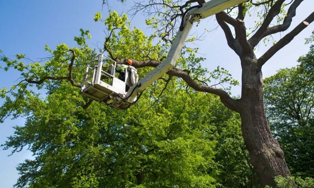 Reasons To Remove a Tree From Your Backyard