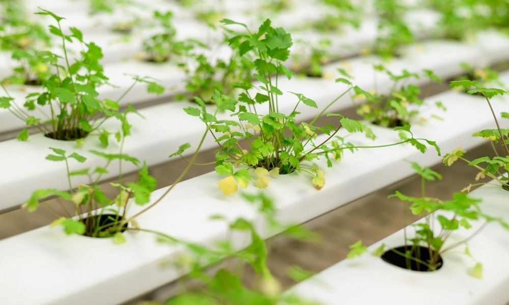 Types of Controlled Environments for Crop Production