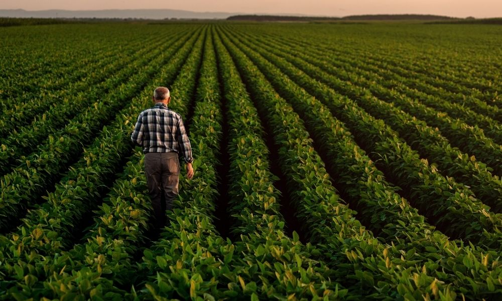 Tips for Starting Your Own Crop Farm