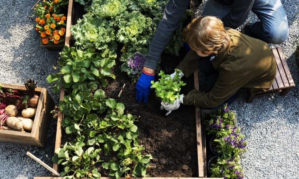 An Easy Guide To Starting a Backyard Garden