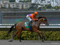 Beholder is Our Number One Horse to Watch for 2014