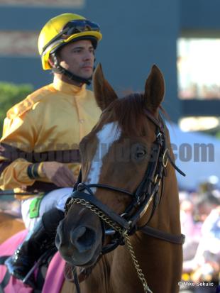 Wise Dan Looks Like He'll Win Horse of the Year Once Again