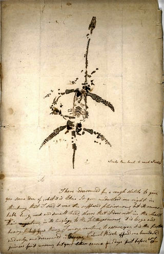 Mary Anning Plesiosaurus: Dec. 26, 1823.